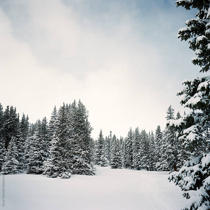 Trees near the Continental Divide by Dave Waddell for Stocksy United