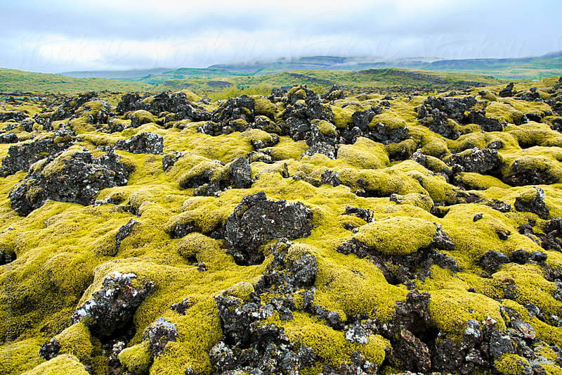 Volcanic rock and moss. Iceland. by John White for Stocksy United