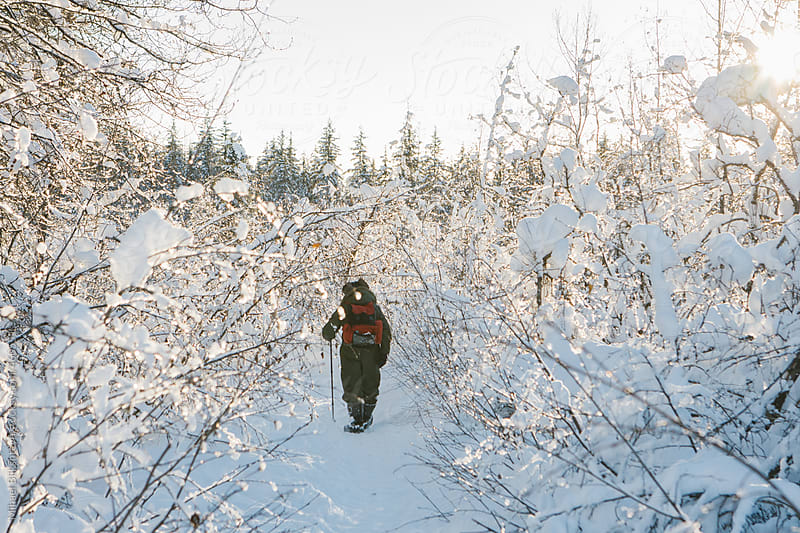 Man walking through snow covered tree along a snow-covered trail during the day in the winter by Mihael Blikshteyn for Stocksy United
