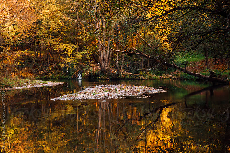 Sunny autumn afternoon on the river by Dimitrije Tanaskovic for Stocksy United