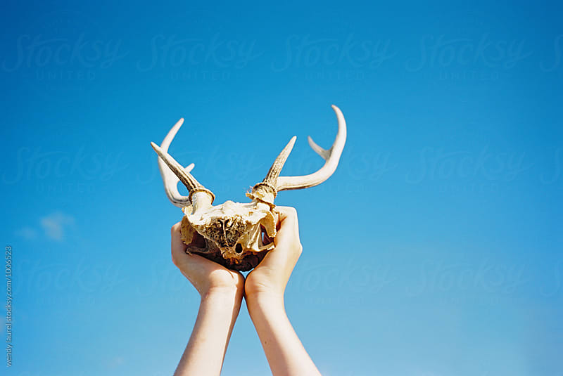 deer skull and antlers held up against blue sky by wendy laurel for Stocksy United