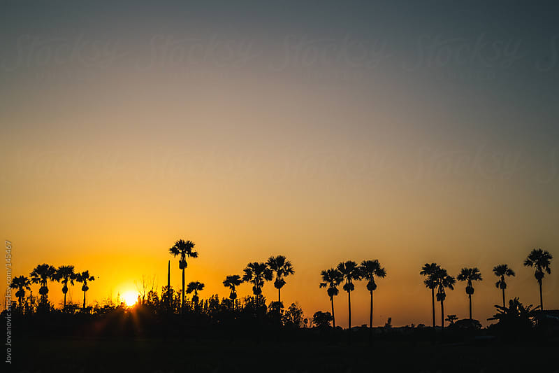 Palm trees during sunset in a tropical paradise. by Jovo Jovanovic for Stocksy United