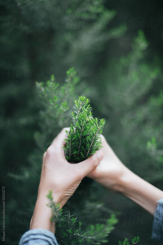 Hands touching in a delicate way some green bushes in the forest by Miquel Llonch for Stocksy United