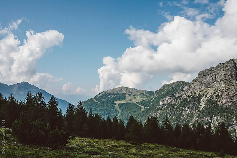 Mountain landscapes with coniferous forest by GIC for Stocksy United