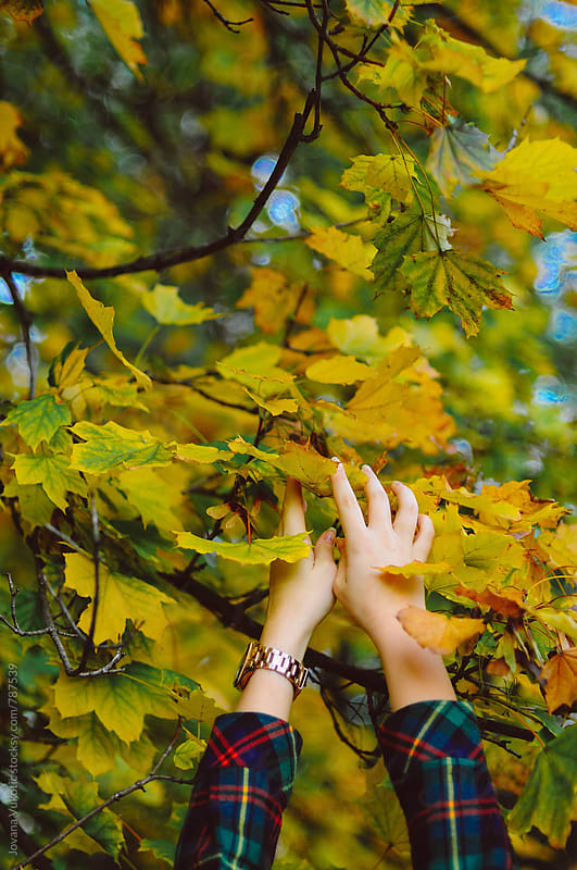 hands and leaves by Jovana Vukotic for Stocksy United