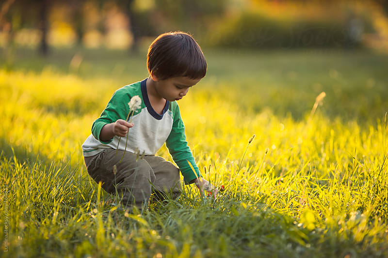 Cute Asian Boy Picking Flowers by Lumina for Stocksy United