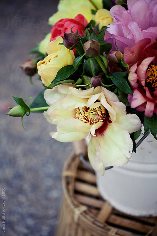 Detail of different coloured peonies bouquet in white enamel can on bamboo table by Laura Stolfi for Stocksy United