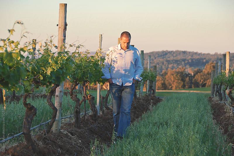 man walking between grape vines by Gillian Vann for Stocksy United
