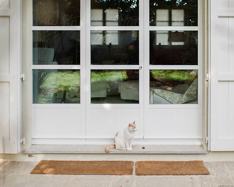 Cat sitting in front of house's glass doors in sunny day by Laura Stolfi for Stocksy United
