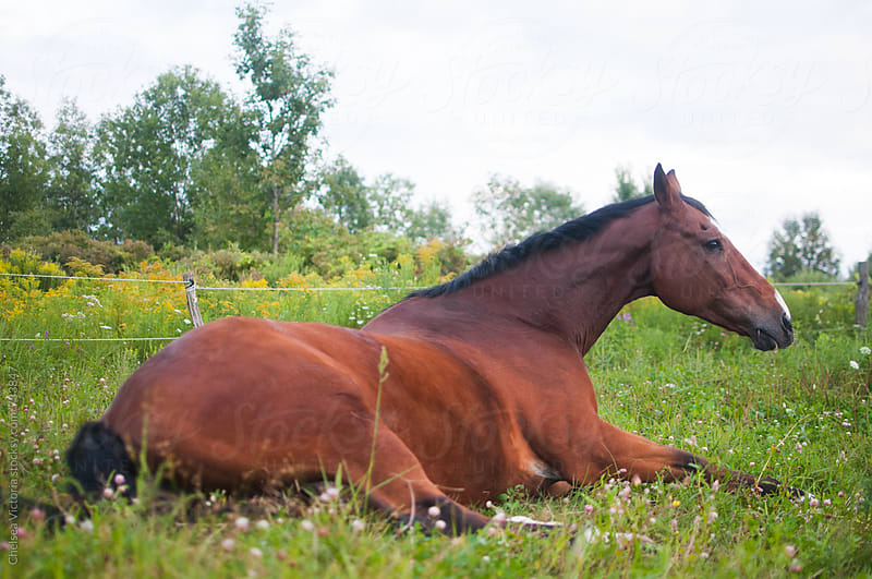 A horse sitting in a meadow by Chelsea Victoria for Stocksy United