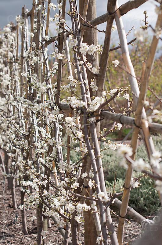 Spring blossom by Mary-Anne Grobler for Stocksy United