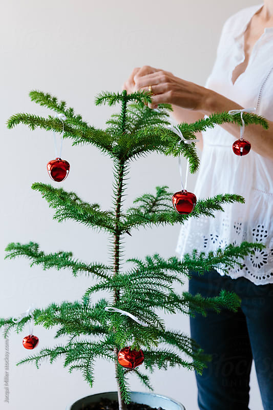 Unrecognisable woman decorating a small Norfolk Island Pine Tree for Christmas by Jacqui Miller for Stocksy United
