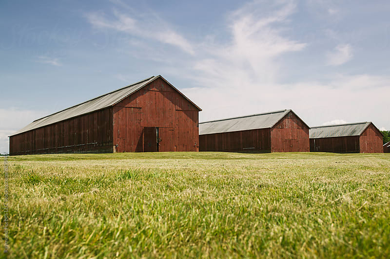 Tobacco Drying Barns Nothern Connecticut, USA by Raymond Forbes LLC for Stocksy United