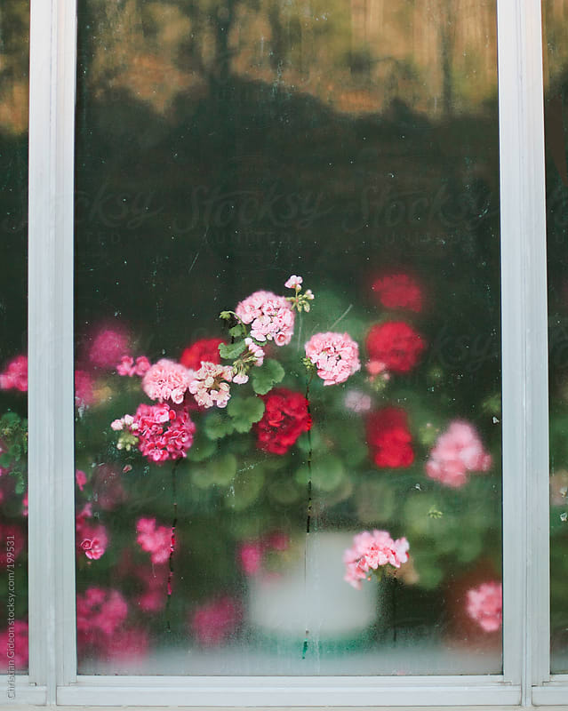 Flowers in window by Christian Gideon for Stocksy United
