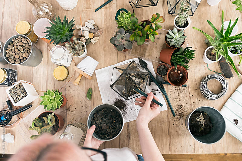 Overhead view of woman transplanting succulents.  by Danil Nevsky for Stocksy United