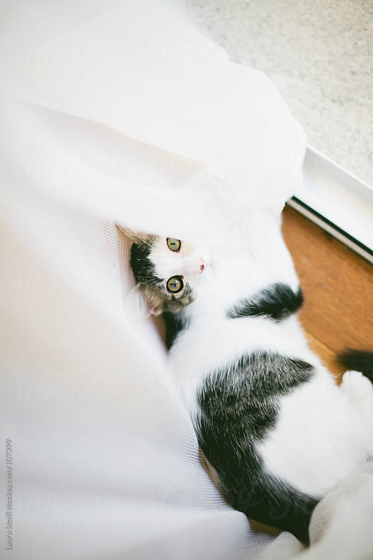 Kitten seen from above while playing with mosquito screen curtain in front of the door by Laura Stolfi for Stocksy United