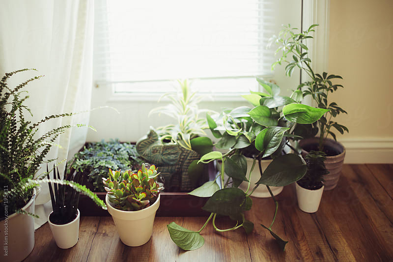Lush green household plants on the floor by kelli kim for Stocksy United