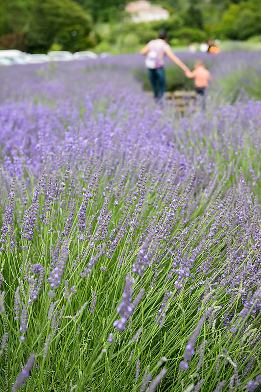 Woman and kid relaxed in garden full of lavendar flowers by Lawren Lu for Stocksy United