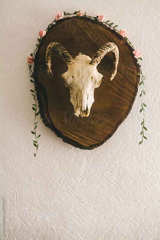 Ram skull mounted on wood with a flower garland. by kkgas for Stocksy United