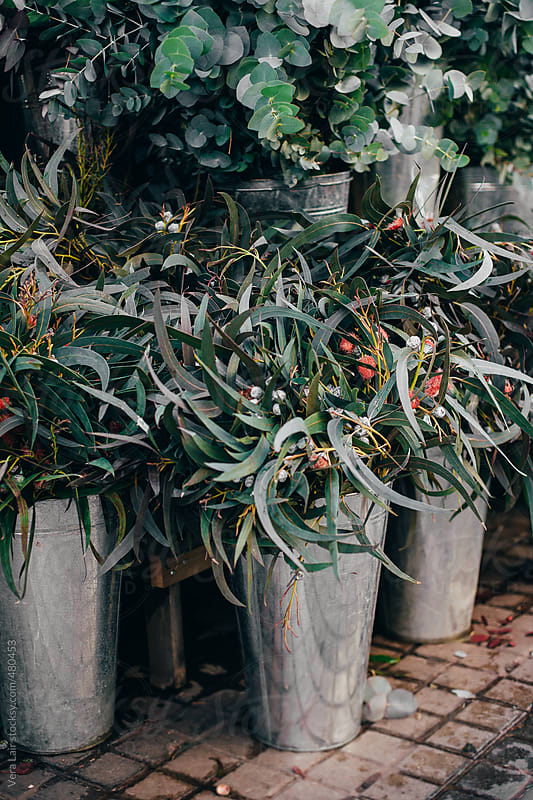 Eucalyptus in a street market by Vera Lair for Stocksy United