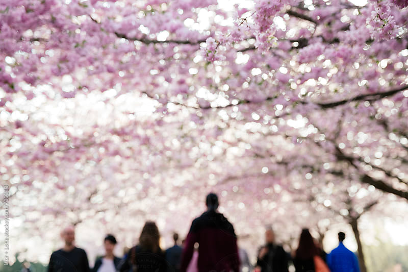 Ambiguous blurry people walking under pink cherry blossom by Lior + Lone for Stocksy United