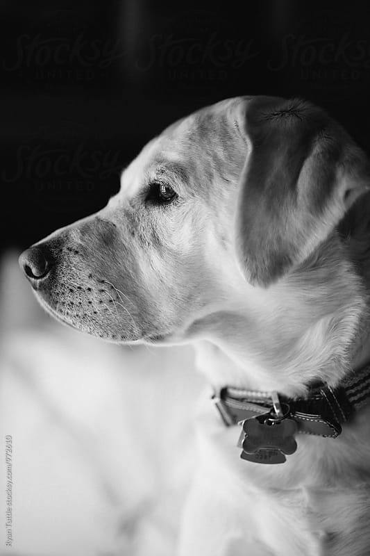 White Lab by Ryan Tuttle for Stocksy United