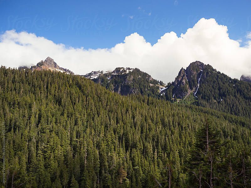 Blue skies, pine trees, mountains. National Park, Washington by Jeremy Pawlowski for Stocksy United