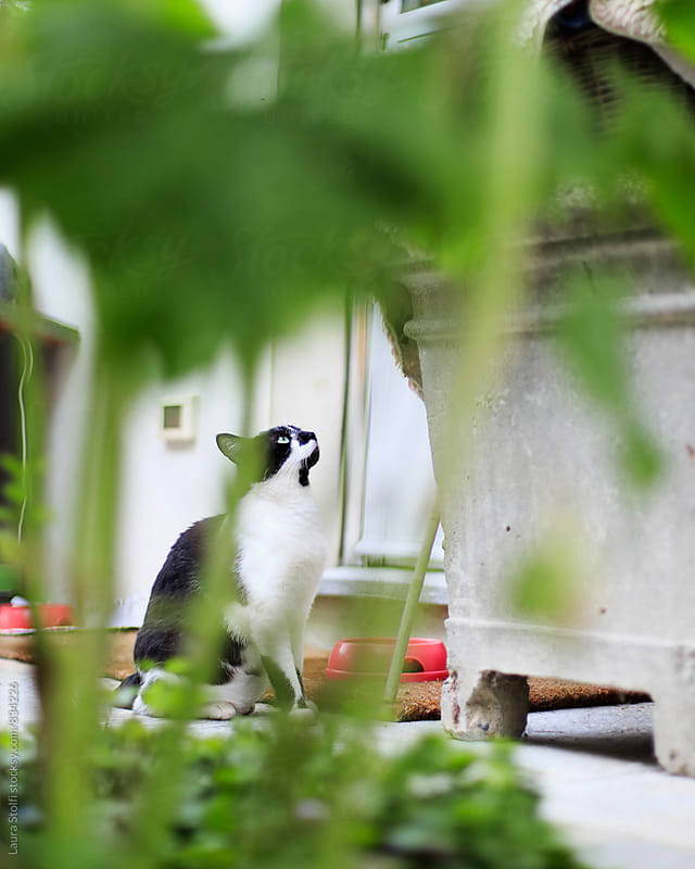 Black and white cat sitting in garden seen through plants in garden by Laura Stolfi for Stocksy United