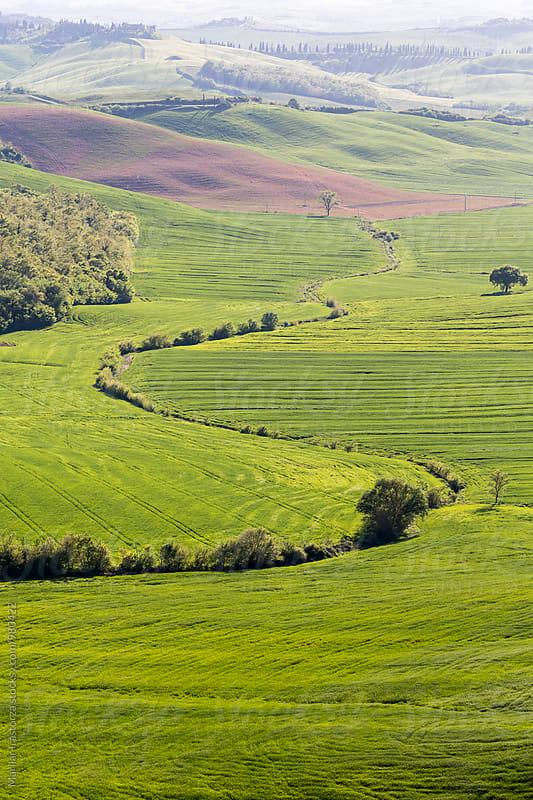 Tuscany Fields by Marilar Irastorza for Stocksy United