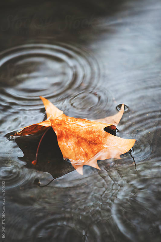Maple leaf at floor on rainy day. Autumn. by BONNINSTUDIO for Stocksy United