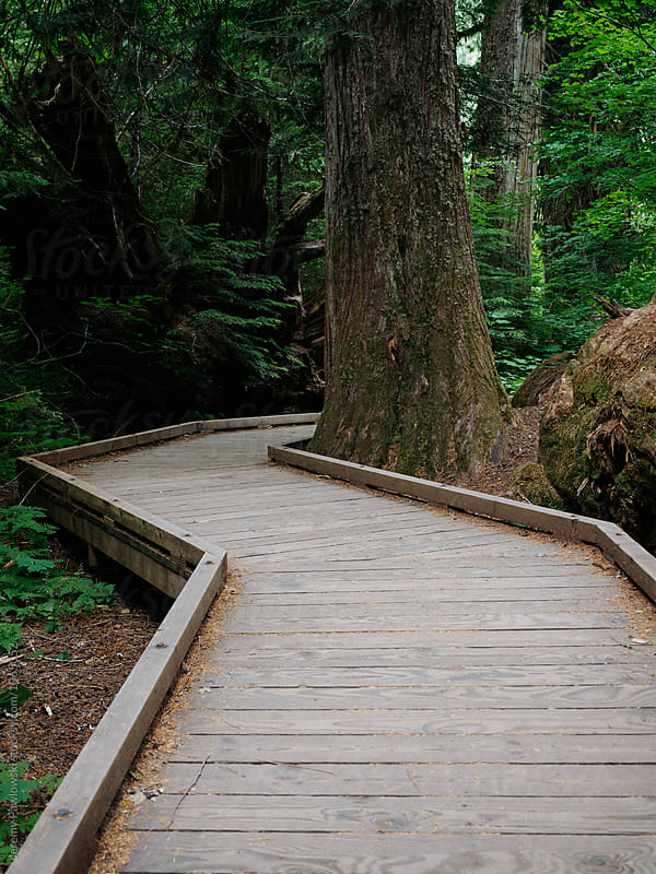 Wooden path winding through trees in dark forest by Jeremy Pawlowski for Stocksy United