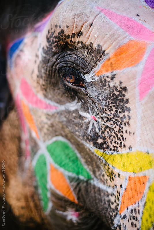 Colorful Elephant by Ryan Dearth Photography for Stocksy United