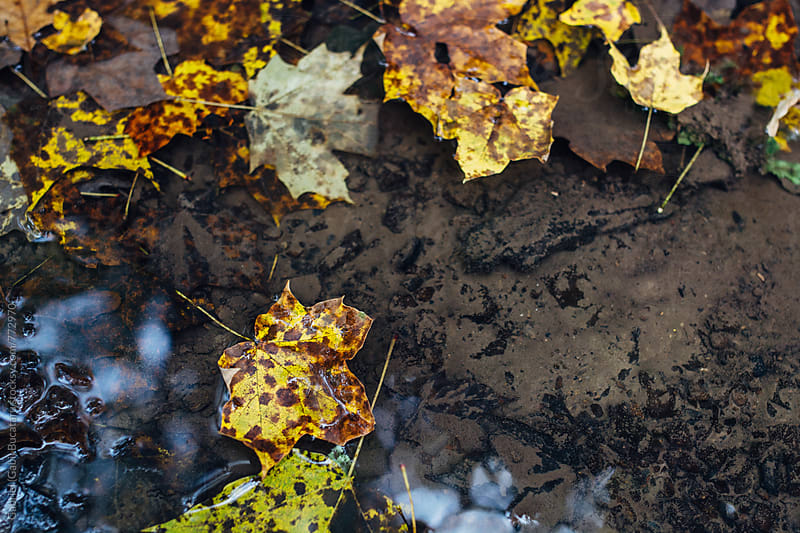 Autumn leaves floating on shallow water by Gabriel (Gabi) Bucataru for Stocksy United