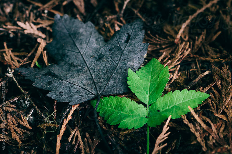 Green and black leaves on forest ground. Dead and alive by Alejandro Moreno de Carlos for Stocksy United