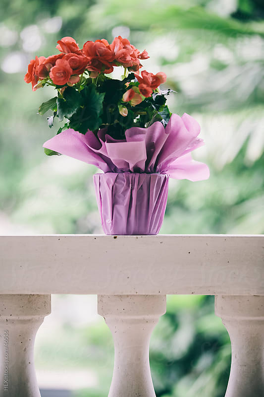 Vase of Flowers on Terrace by HEX . for Stocksy United