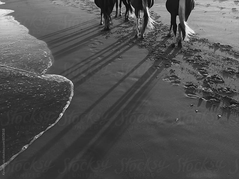 Wild Hooves Along the Shoreline by Kevin Russ for Stocksy United