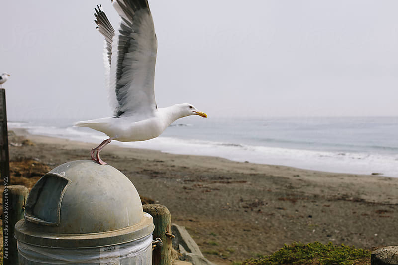 Seagul takes flight to ocean from a garbage can by Ania Boniecka for Stocksy United