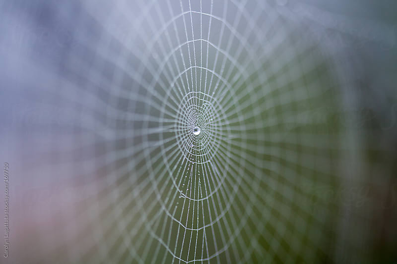 Beautiful, intricate spider web with a droplet right in the middle by Carolyn Lagattuta for Stocksy United