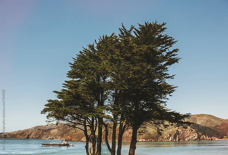boat and trees in san fransisco  by Sam Hurd Photography for Stocksy United