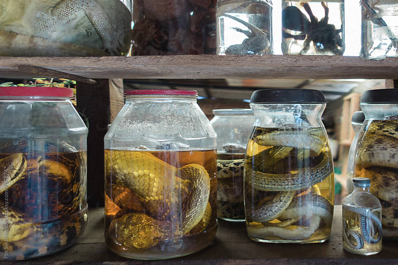 Collection of creepy animals in jars - spiders, snakes, lizards by Per Swantesson for Stocksy United