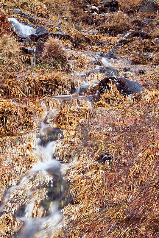 Mountain stream and orange grass in Autumn. Cumbria, UK. by Liam Grant for Stocksy United