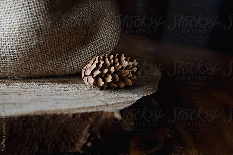 pinecone sits on wood disc by burlap fabric by Tana Teel for Stocksy United