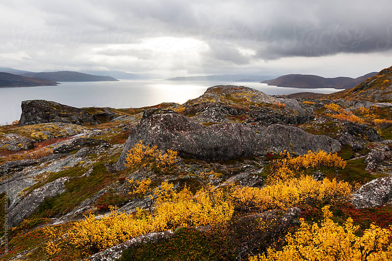 Autumn colours in northern Norway by Jonatan Hedberg for Stocksy United