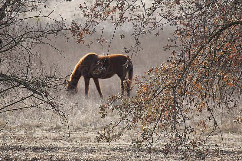 Horse grazes in pasture behind hanging branches by Monica Murphy for Stocksy United