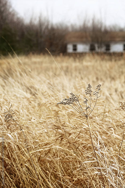Autumn field grass in late November by Sandra Cunningham for Stocksy United