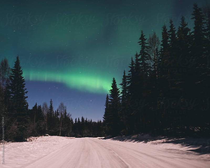 snow covered, tree lined road with the aurora borealis overhead by Tara Romasanta for Stocksy United