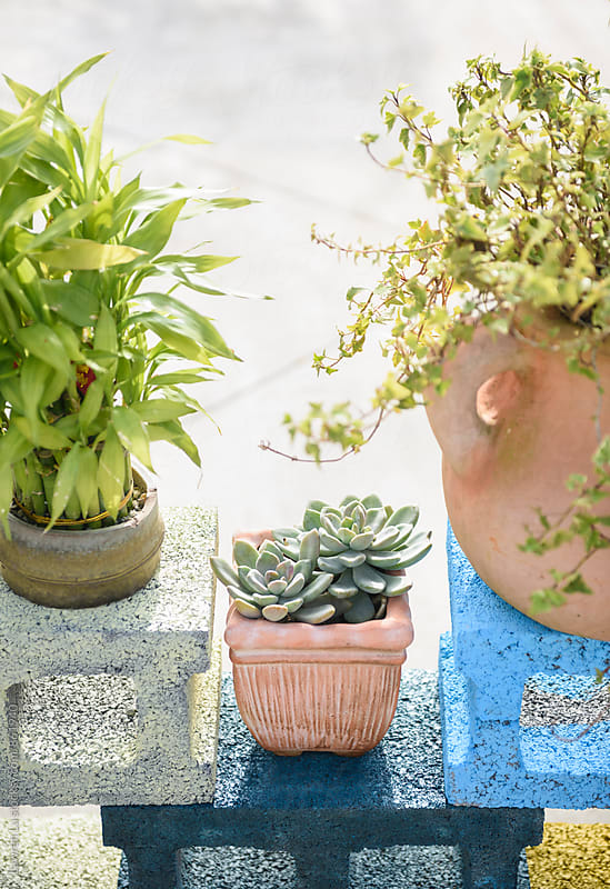 Plants in pot piling on colorful cement bricks by Lawren Lu for Stocksy United