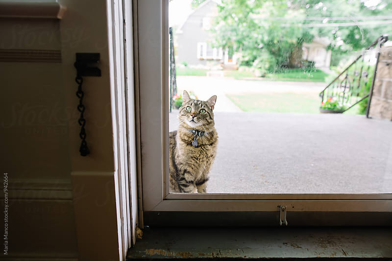 cat waiting to come inside home by Maria Manco for Stocksy United