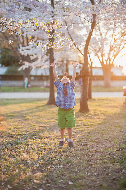 Young Toddler Boy Reaching For A Cherry Blossom by Cameron Whitman for Stocksy United