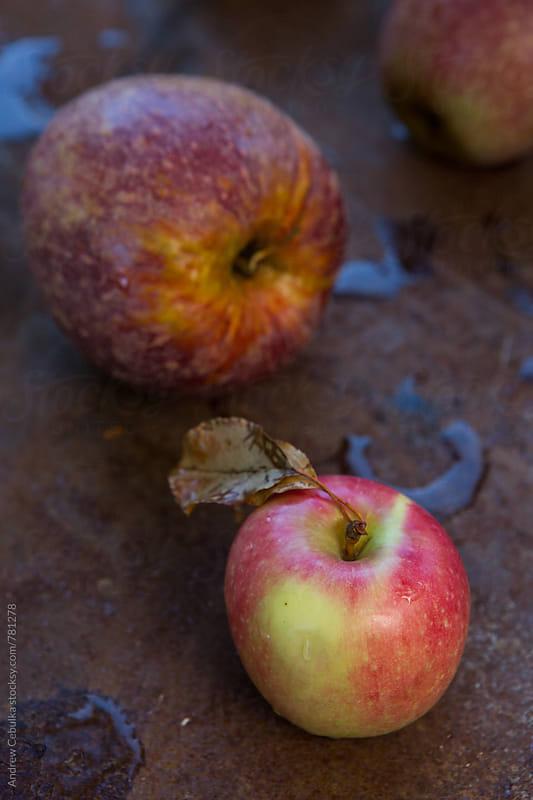 apple portraits - digital file by Andrew Cebulka for Stocksy United